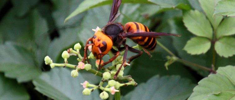 ⑥蜂から逃げる夢